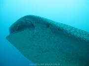 malediven-2013-108