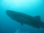malediven-2013-111