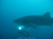 malediven-2013-113