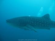 malediven-2013-114