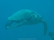 malediven-2013-117