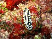malediven-2013-119
