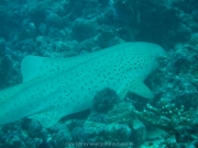 malediven-2013-126