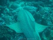 malediven-2013-127