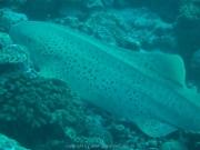 malediven-2013-128