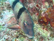malediven-2013-132