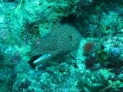 malediven-2013-139