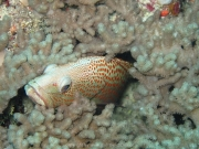 malediven-2013-163
