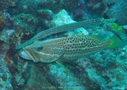 malediven-2013-164