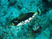 malediven-2013-168