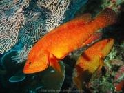 malediven-2013-171