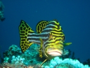 malediven-2013-172
