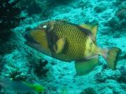 malediven-2013-174