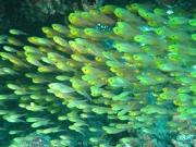 malediven-2013-175