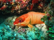 malediven-2013-177