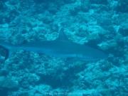 malediven-2013-198