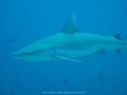 malediven-2013-199