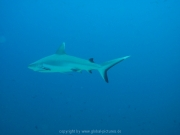 malediven-2013-200