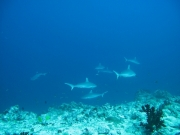 malediven-2013-209