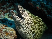 malediven-2013-226