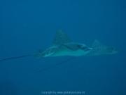 malediven-2013-233