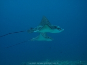 malediven-2013-235