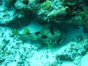 malediven-2013-240