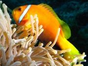malediven-2013-261