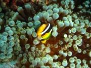 malediven-2013-262