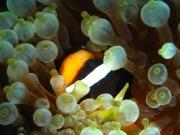 malediven-2013-263