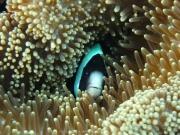 malediven-2013-267