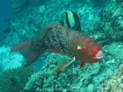 malediven-2013-270
