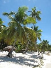 saona-island-24