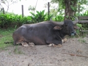 Khao Lak und Phuket - 096