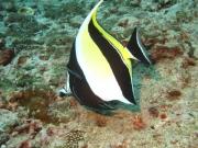 Tauchen Ko Phi Phi - 056