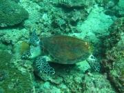 Tauchen Ko Phi Phi - 073