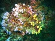 Tauchen Ko Phi Phi - 079