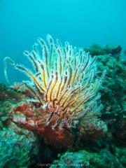 Tauchen Ko Phi Phi - 090