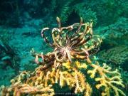 Tauchen Ko Phi Phi - 093