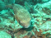 Tauchen Ko Phi Phi - 095