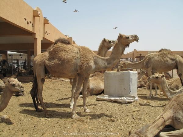 Abu Dhabi - Al Ain City - 20