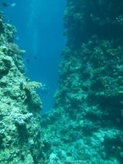 Soma Bay - 126