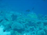 Soma Bay - 239