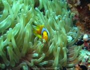 Soma Bay - 245