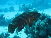 Soma Bay 09-2016 - 095
