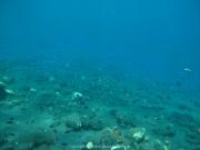Bali-Dive-009