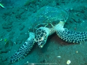 Bali-Dive-011
