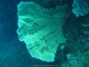 Bali-Dive-012