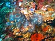 Bali-Dive-013