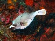 Bali-Dive-014